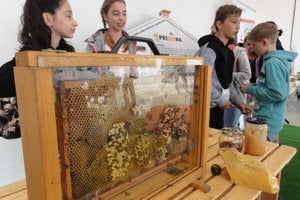 Granvia predviedla deťom, ako žijú včely.