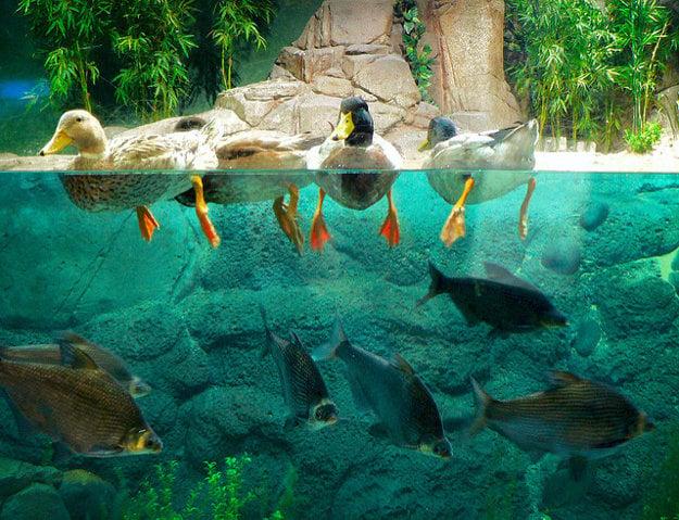 V akváriu v Šanghaji možno sledovať aj vodný život z povodia rieky Jang C´.