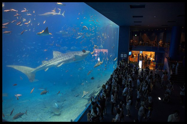 Okinawa Churaumi Aquarium.