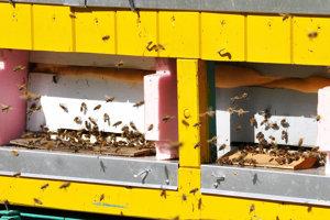 Adrenalínové pero stojí len 36 eur, no človeku, ktorého uštipla včela, dokáže zachrániť život