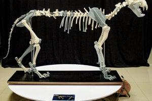 Kostra leva jaskynného (Panthera spelaea), vyrobená technológiou 3D tlače v Digitalizačnom centre Múzea SNP v Banskej Bystrici.