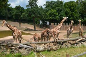 Zoo v Brne