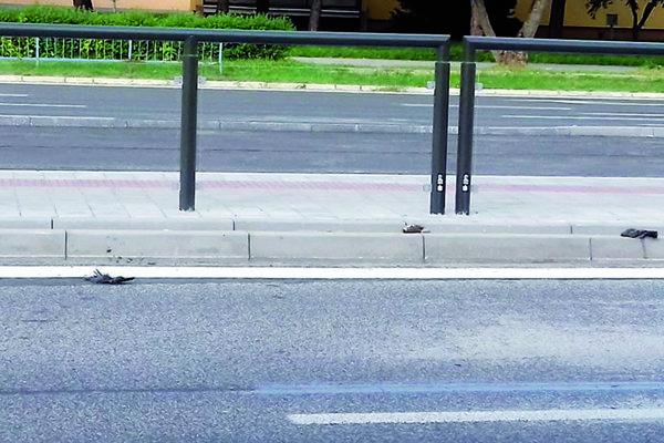 Uhynuté vtáky na novej zastávke.