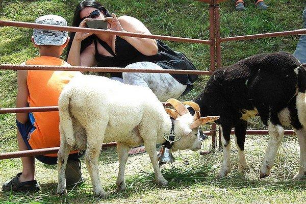 V súťaži onajkrajšie jahňa si zmeralo sily osem chovateľov.