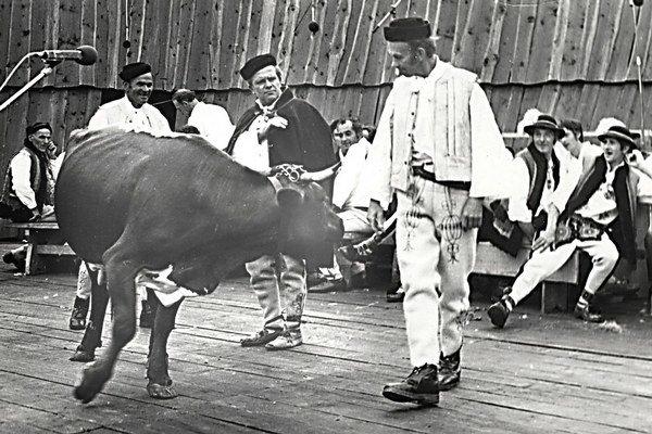 Vystúpenie v roku 1977, Zázrivčania sa jednajú o kravu.