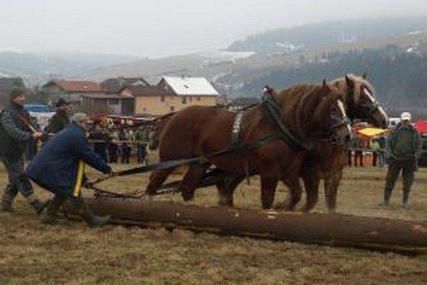 Kone musia byť nielen silné, ale musia počúvať svojho pána.