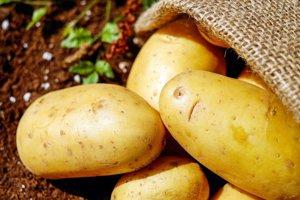Hľuzová a koreňová zelenina. Napríklad zemiaky, sladké zemiaky,  repa, mrkva, zeler, petržlen