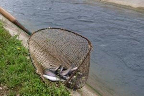 Ryby treba pravidelne sledovať.