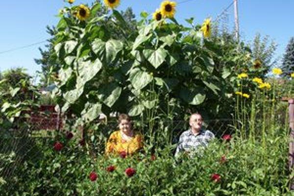 Michal a Magdaléna Meškovci z Tvrdošína, ale aj ľudia z ich okolia majú z obrovských slnečníc radosť.