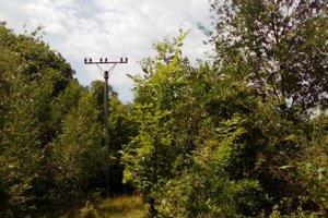 Stromy sú neraz presahujú elektrické vedenie.