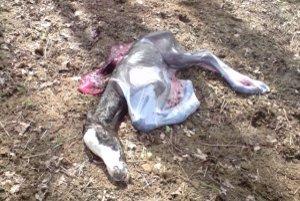 Mŕtve žriebätko ležalo v parku niekoľko hodín.