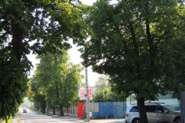 Ulica s lipami. Chodník sa bude rekonštruovať.