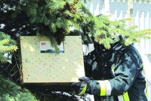 Práca so včelami. Roj odoberajú hasiči pravidelne, niekedy volajú aj včelára.