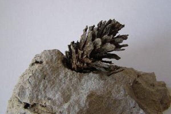 Desať miliónov rokov stará šiška sa našla pri tehelni v Martine.