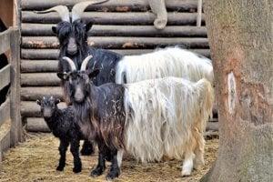 Najmenšia Zoo v SR je v Spišskej Novej Vsi