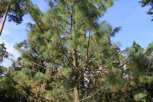Stromom chýbajú popisky