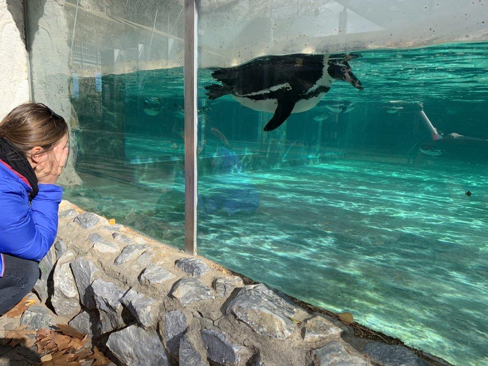 Plávajúci tučniak