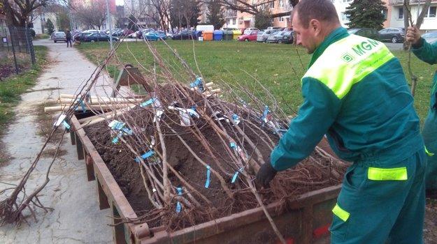 Dobšinského sad vysadili profesionálni záhradníci.