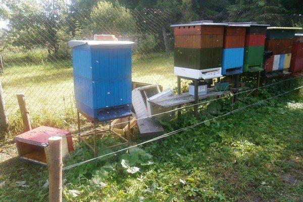 Medvede sa chodia do Iľanova kŕmiť medom. zanechávajú spúšť. Od pravidelných návštev ich neodrádzajú ani elektrické oplôtky.