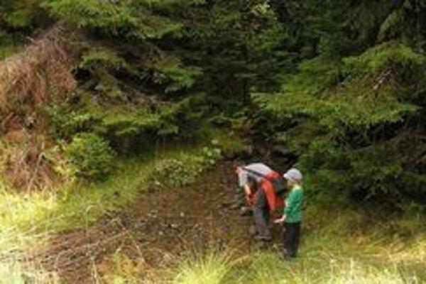 Turistom môžu skomplikovať letné túry dôsledky ťažby kalamitného dreva.