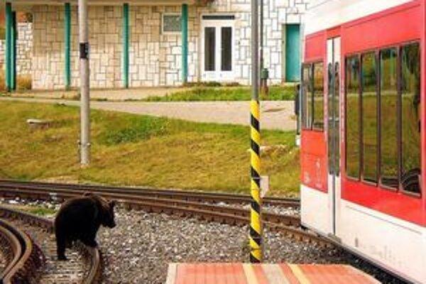 S medveďmi sa už ľudia môžu stretnúť všade. Aj na železničnej stanici.