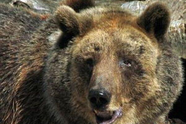 Problémy s medveďmi pri kontajneroch na sídliskách či v dedinách vznikli, lebo ľudia ich vytláčajú z ich prirodzeného prostredia. Zvieratá potom hľadajú potravu pri ľudských obydliach.