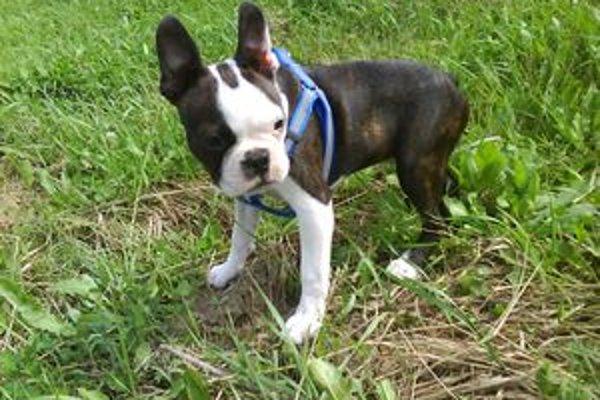 Majitelia sú povinní zaevidovať psíka od šiestich mesiacov.