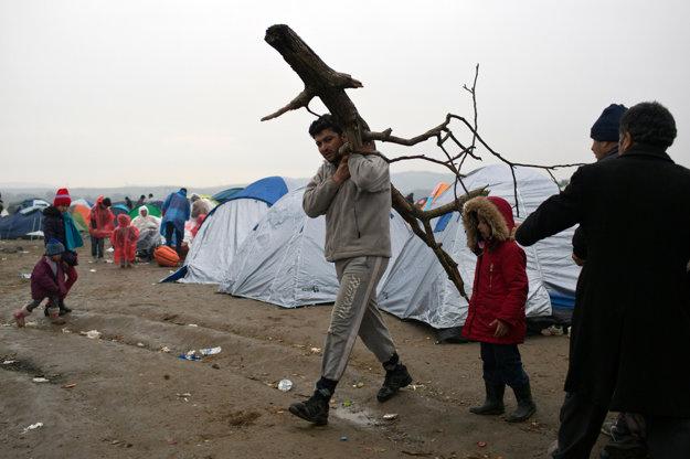 Utečenec nesie veľkú vetvu v tábore blízko grécko-macedónskych hraníc.