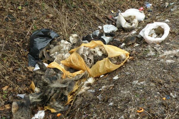 Živočíšny odpad odstránilo mesto.