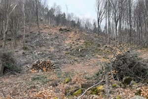 Staré stromy uvoľnili miesto mladším.