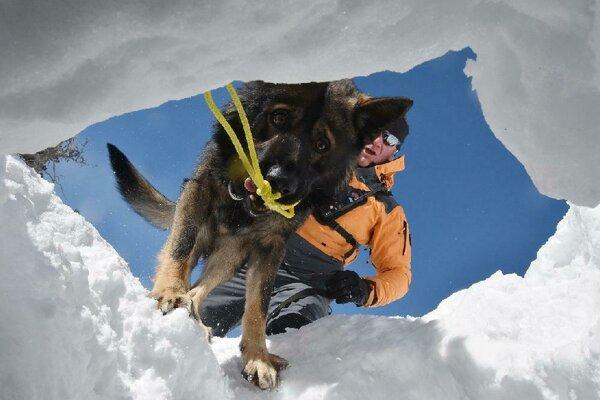 Záchranársky pes v akcii.