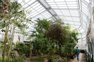 Botanická záhrada Botanická záhrada UPJŠ vznikla v roku 1950 a je situovaná v širšom centre mesta v blízkosti Červeného brehu.