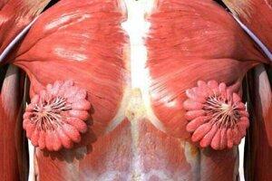 Záber, ktorý sa šíri na internete, nie je fotografia. Ide o nepresnú vizualizáciu z aplikácie Anatomy & Physiology - anatomy of human body parts.