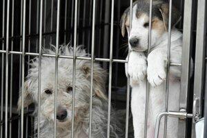 Odchytené psy budú umiestnené v útulku v Bratislave a Veľkých Kapušanoch.