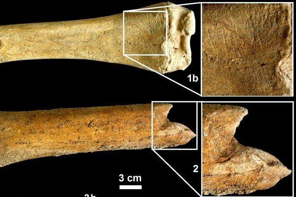 Neandertálski lovci obíjali kosti, aby z nich získavali kostnú dreň (špik).