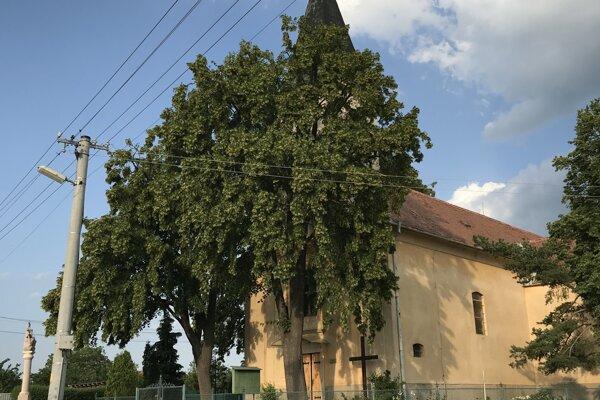 Lipy rastú v susedstve kostola.