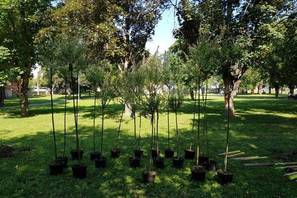 do sadenia sa zapojilo viac ako 100 dobrovoľníkov.