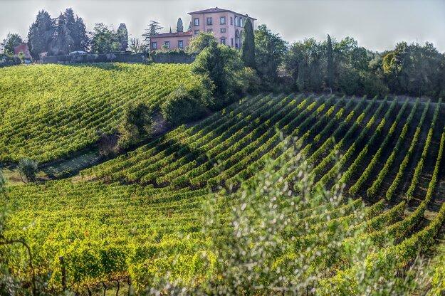 Toskánske vinice
