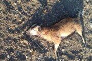 Jedno z psami usmrtených zvierat.