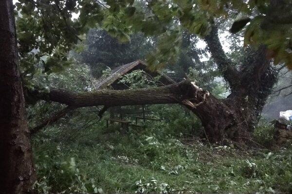 Padnutý strom v Belej nad Cirochou.