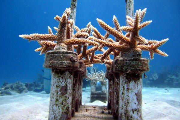 Ak z koralových útesov zmiznú kľúčové druhy, čaká ich vlastný koniec.