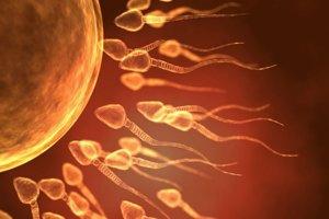 Našli spôsob, ako oplodniť vajíčko bez spermie.