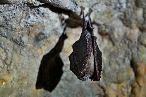 Európska noc netopierov v košickej zoo.
