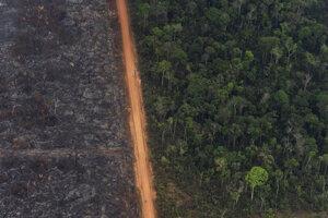 Bujný prales je vedľa rozsiahlej plochy amazonského dažďového pralesa zničeného požiarom v brazílskej oblasti Vila Nova Samuel.