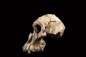 Lebka je stará 3,8 milióna rokov.