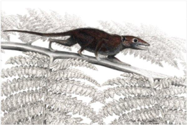 Najstarší predok placentálnych cicavcov Juramaia sinensis lovil v konároch stromov hmyz.