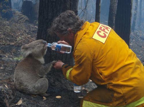 ohorena-koala_reuters.jpg