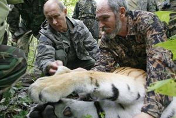 Ruský premiér Vladimir Putin sa s tigrami fotografoval rád. O niekoľko rokov by už mačkovité šelmy v Rusku nemuseli žiť.