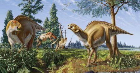dinosaury_bielkoviny3.jpg