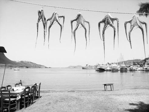 octopus-garden.jpg